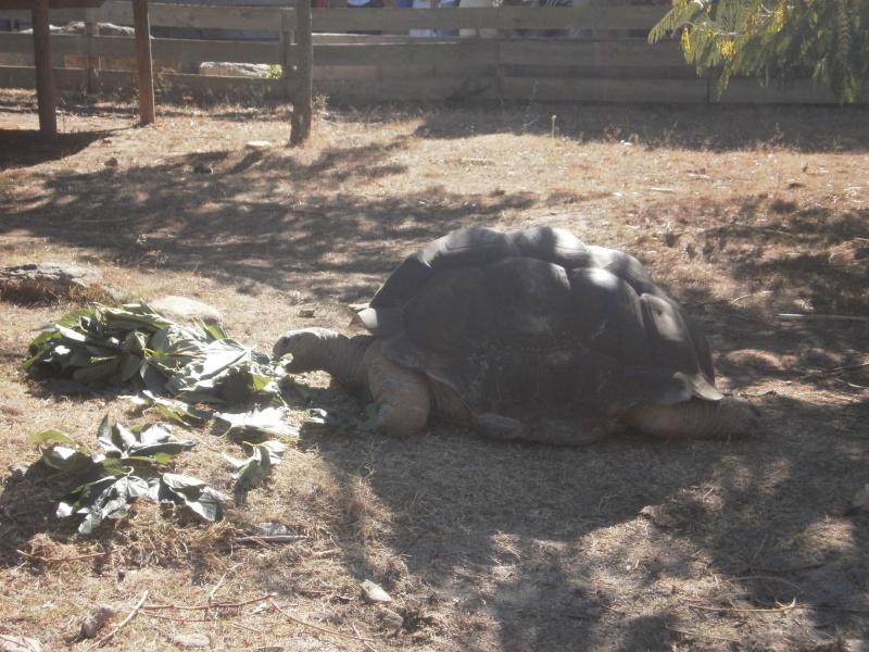 La Vallée des tortues - Sorède - 15.09.2012/13/04/2014 P9150115