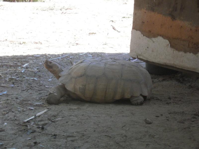 La Vallée des tortues - Sorède - 15.09.2012/13/04/2014 P9150116