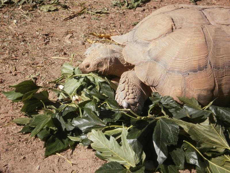 La Vallée des tortues - Sorède - 15.09.2012/13/04/2014 P9150117
