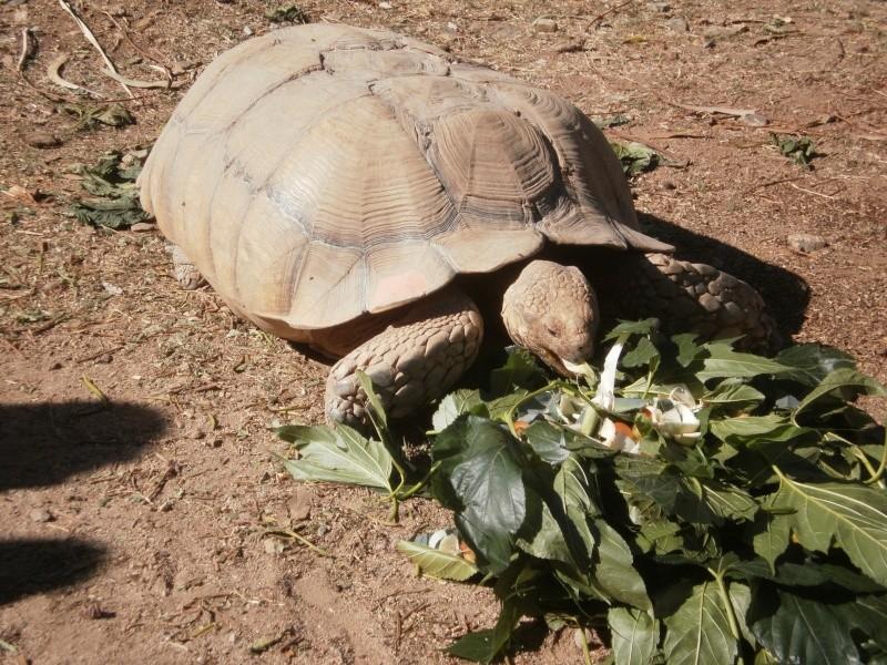 La Vallée des tortues - Sorède - 15.09.2012/13/04/2014 P9150118