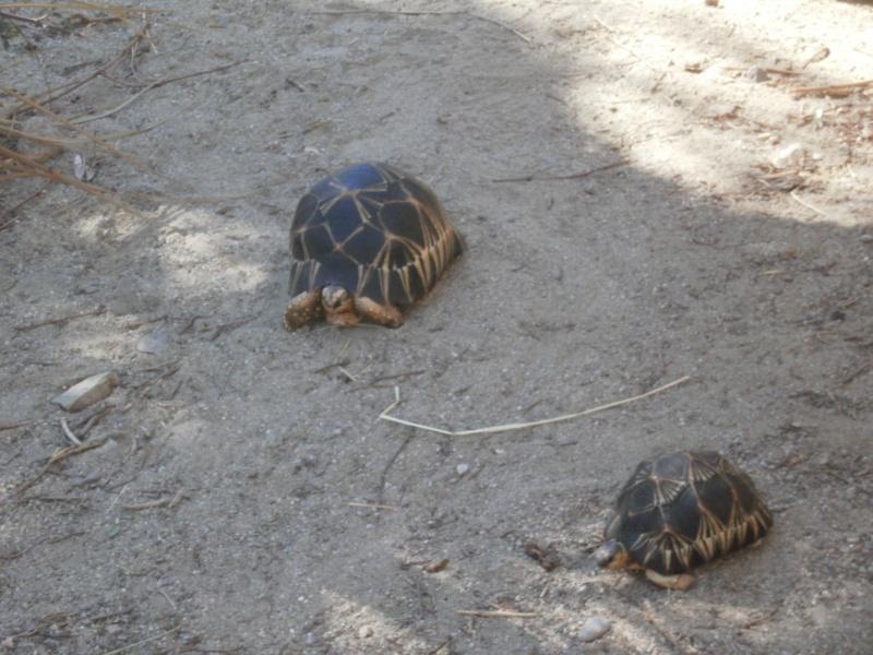 La Vallée des tortues - Sorède - 15.09.2012/13/04/2014 P9150119