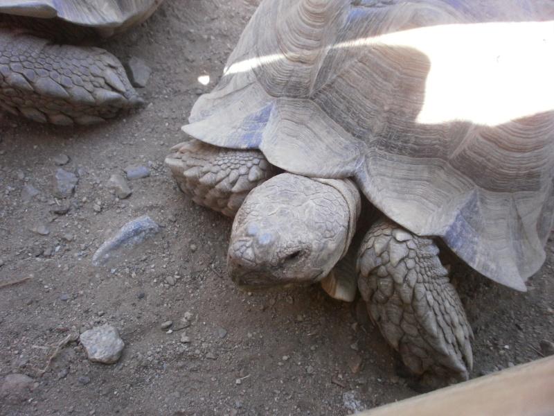La Vallée des tortues - Sorède - 15.09.2012/13/04/2014 P9150120