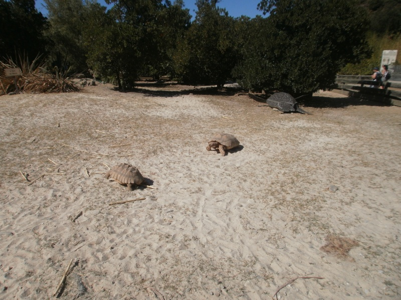 La Vallée des tortues - Sorède - 15.09.2012/13/04/2014 P9150121