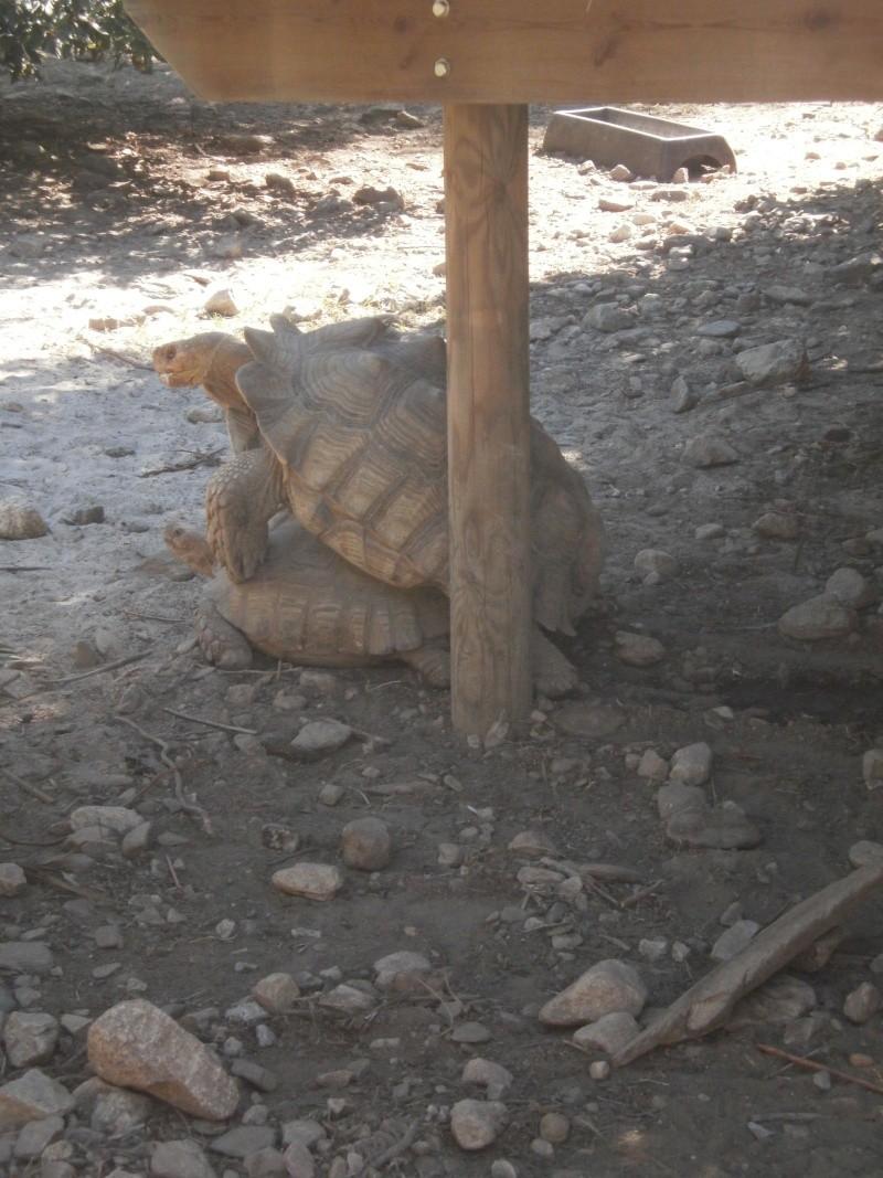 La Vallée des tortues - Sorède - 15.09.2012/13/04/2014 P9150122
