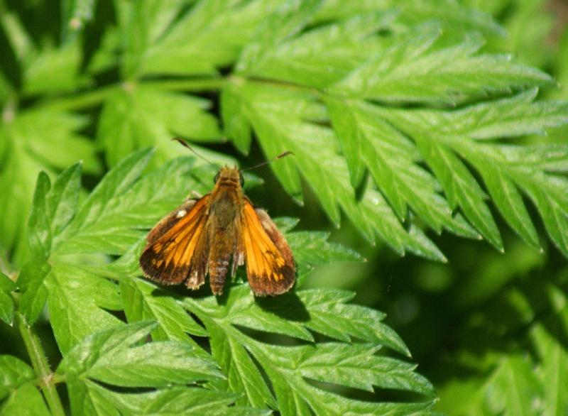 Autres papillons Parc_n10
