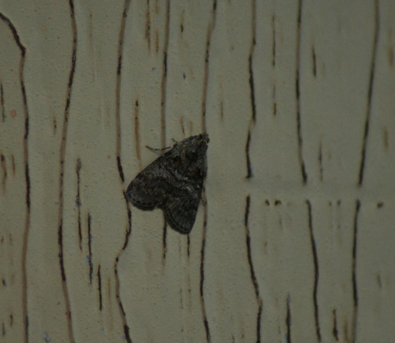Autres papillons Saint-11