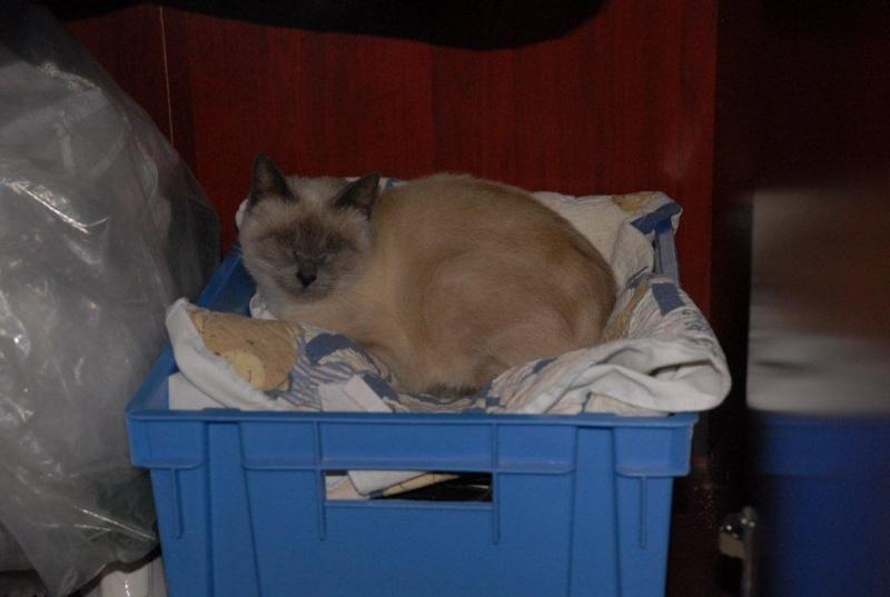 Photos des chats sauvés, avant/après - Page 2 Dsc_0010
