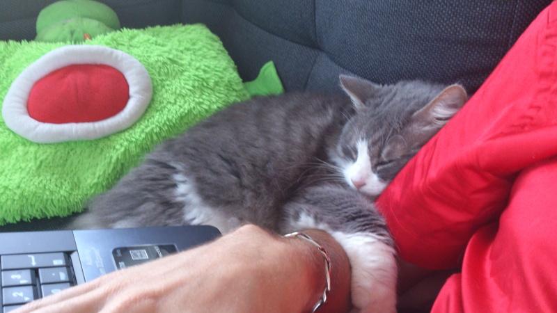 Photos des chats sauvés, avant/après - Page 2 Dsc_0110