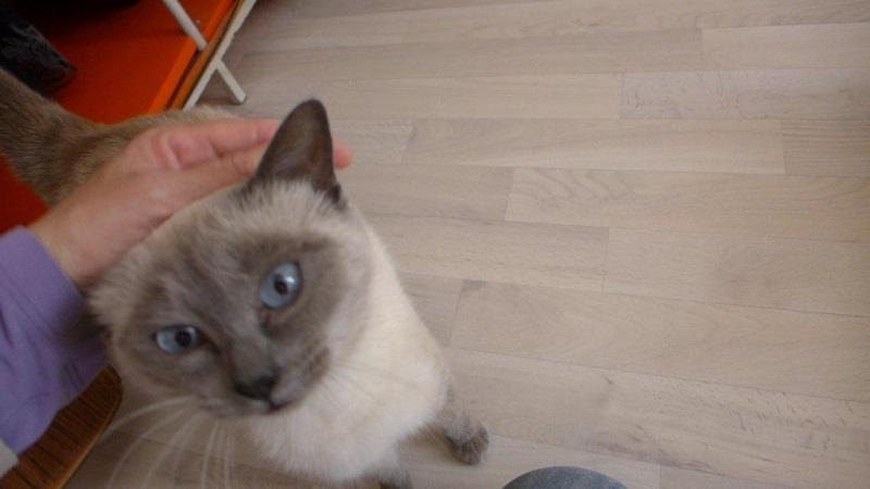Photos des chats sauvés, avant/après - Page 2 Instan10