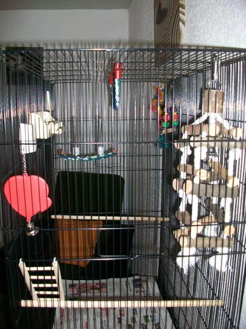 Bien organiser sa cage 2.0.  - Page 4 100_2311