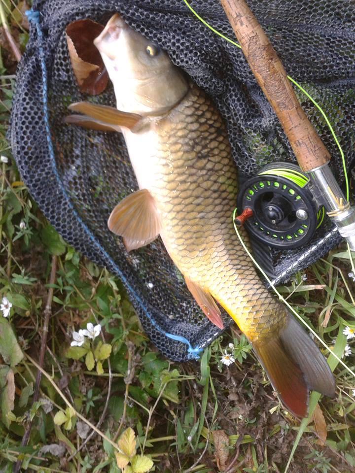 Panaché de poissons  P310