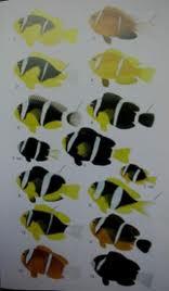 mes amphiprions ocellaris noire Images10