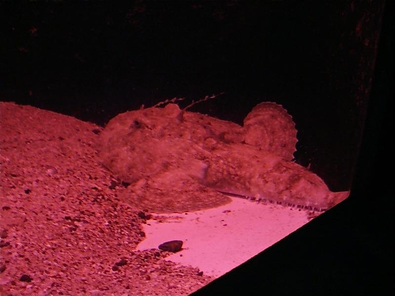Aquarium de Saint Malo (35) Dsc04121