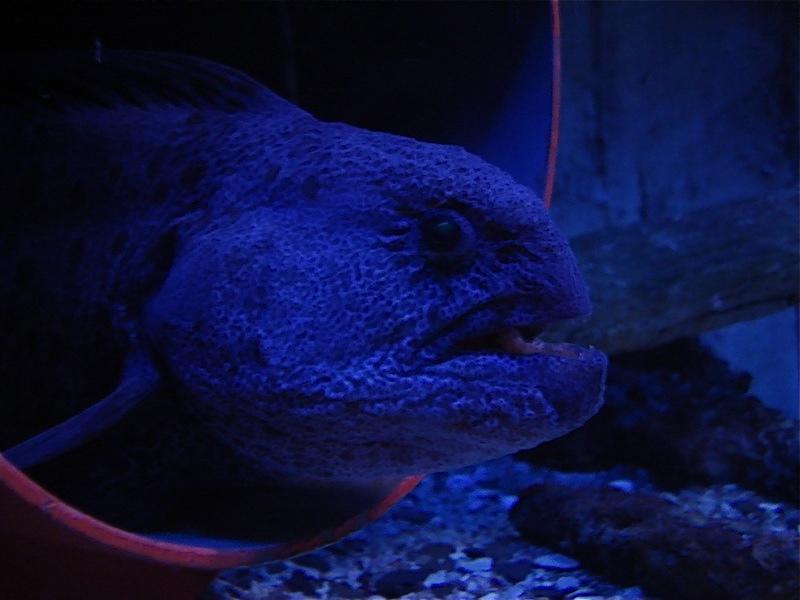 Aquarium de Saint Malo (35) Dsc04122