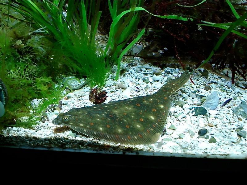 Aquarium de Saint Malo (35) Dsc04124