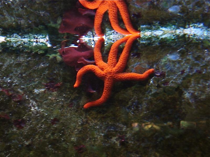 Aquarium de Saint Malo (35) Dsc04125