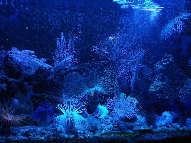 Aquarium de Saint Malo (35) Dsc04126