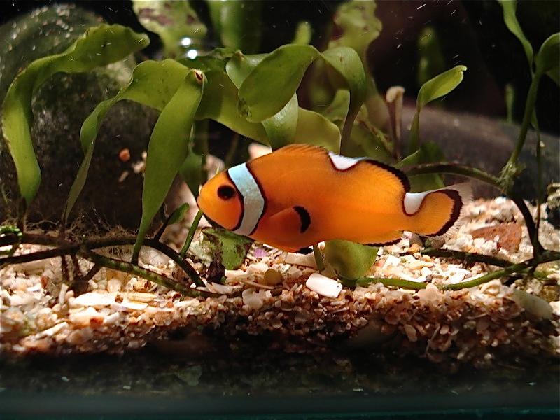 Aquarium de Saint Malo (35) Dsc04127