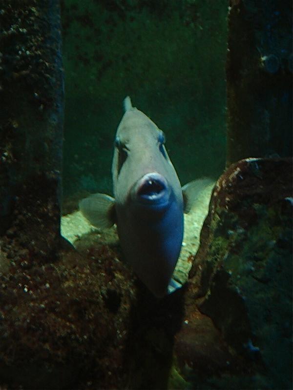 Aquarium de Saint Malo (35) Dsc04129