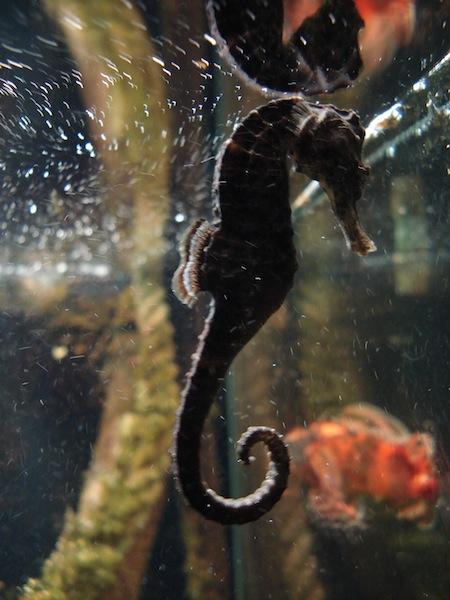 Aquarium de Saint Malo (35) Dsc04218