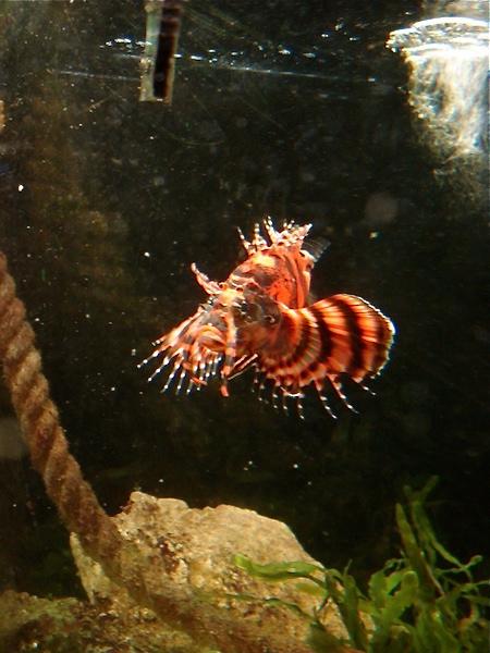 Aquarium de Saint Malo (35) Dsc04219