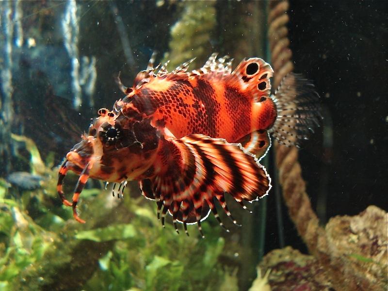 Aquarium de Saint Malo (35) Dsc04221
