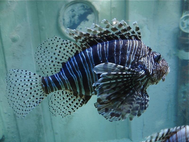 Aquarium de Saint Malo (35) Dsc04222