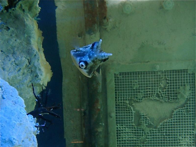 Aquarium de Saint Malo (35) Dsc04223