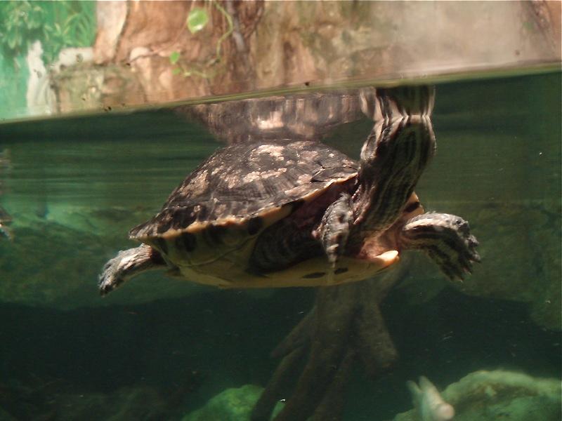 Aquarium de Saint Malo (35) Dsc04224