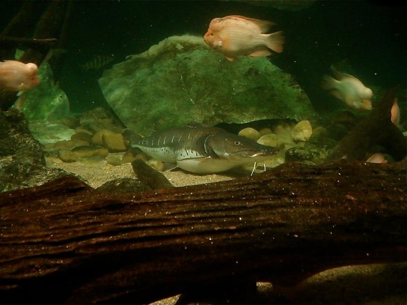 Aquarium de Saint Malo (35) Dsc04225