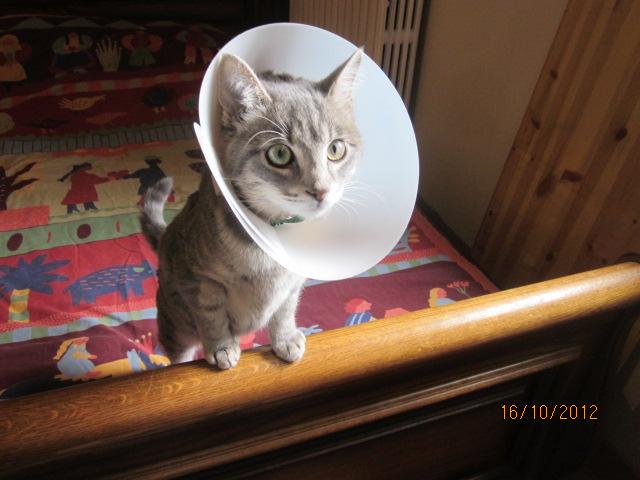 Rdv chez le vétérinaire pour Eos - Page 2 Img_3917