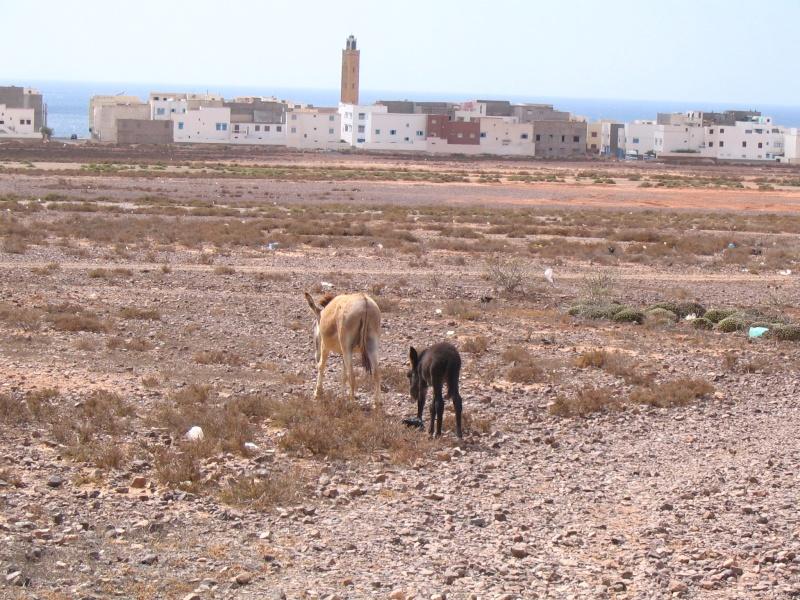 Encore des devinettes!! - Page 6 Maroc210