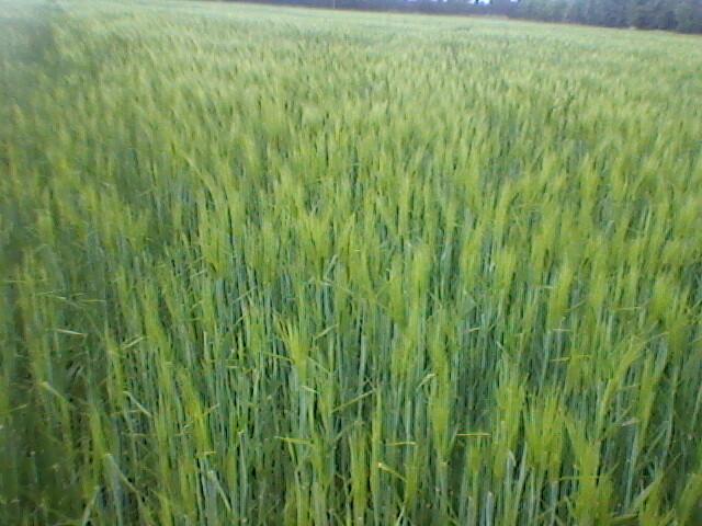 TDP en bio pour les agribio Photo-10