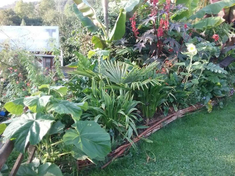 Mon jardin Ardennais 20190910