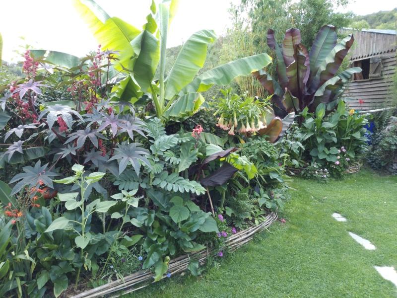 Mon jardin Ardennais Img_2036