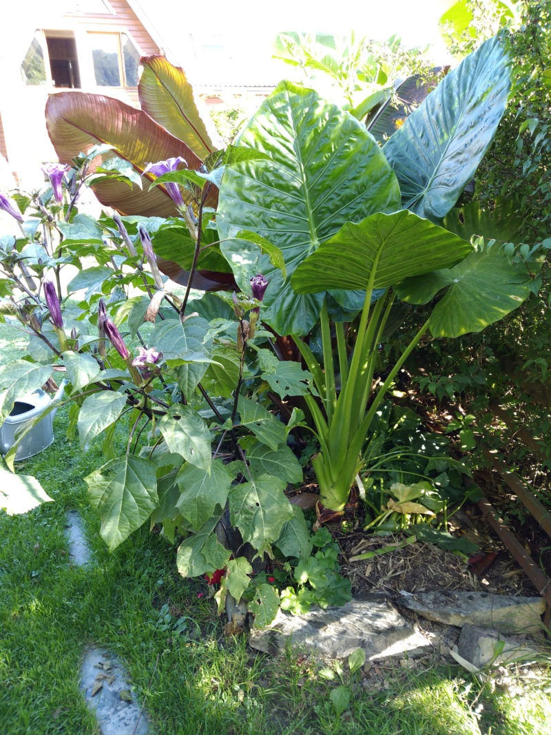 Mon jardin Ardennais Img_2039