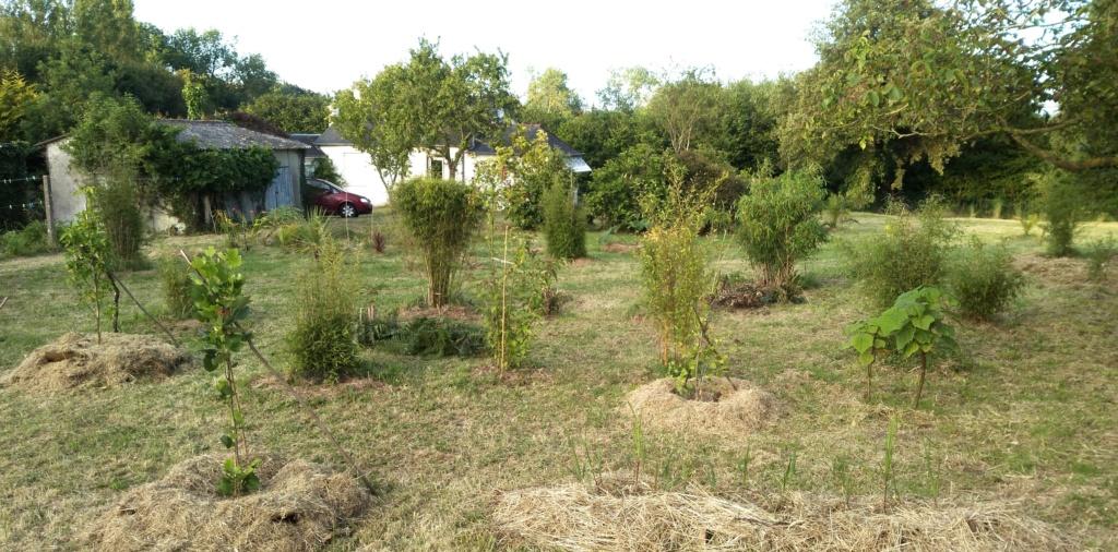 Jardin guiziérois Img_2052
