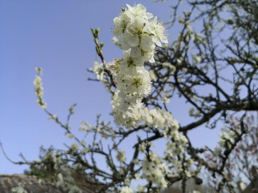 Floraisons du mois d'Avril Img_2065