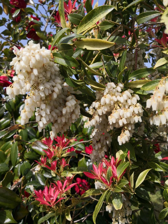 Floraisons du mois d'Avril Img_2067
