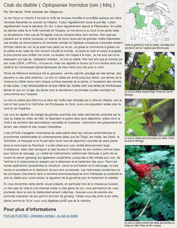 Oplopanax horridus  Oplopa10