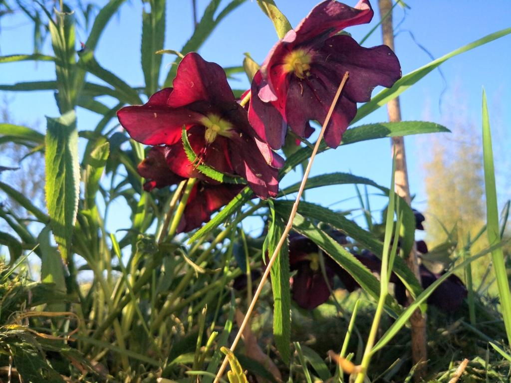 Floraisons du mois d'Avril Origin10