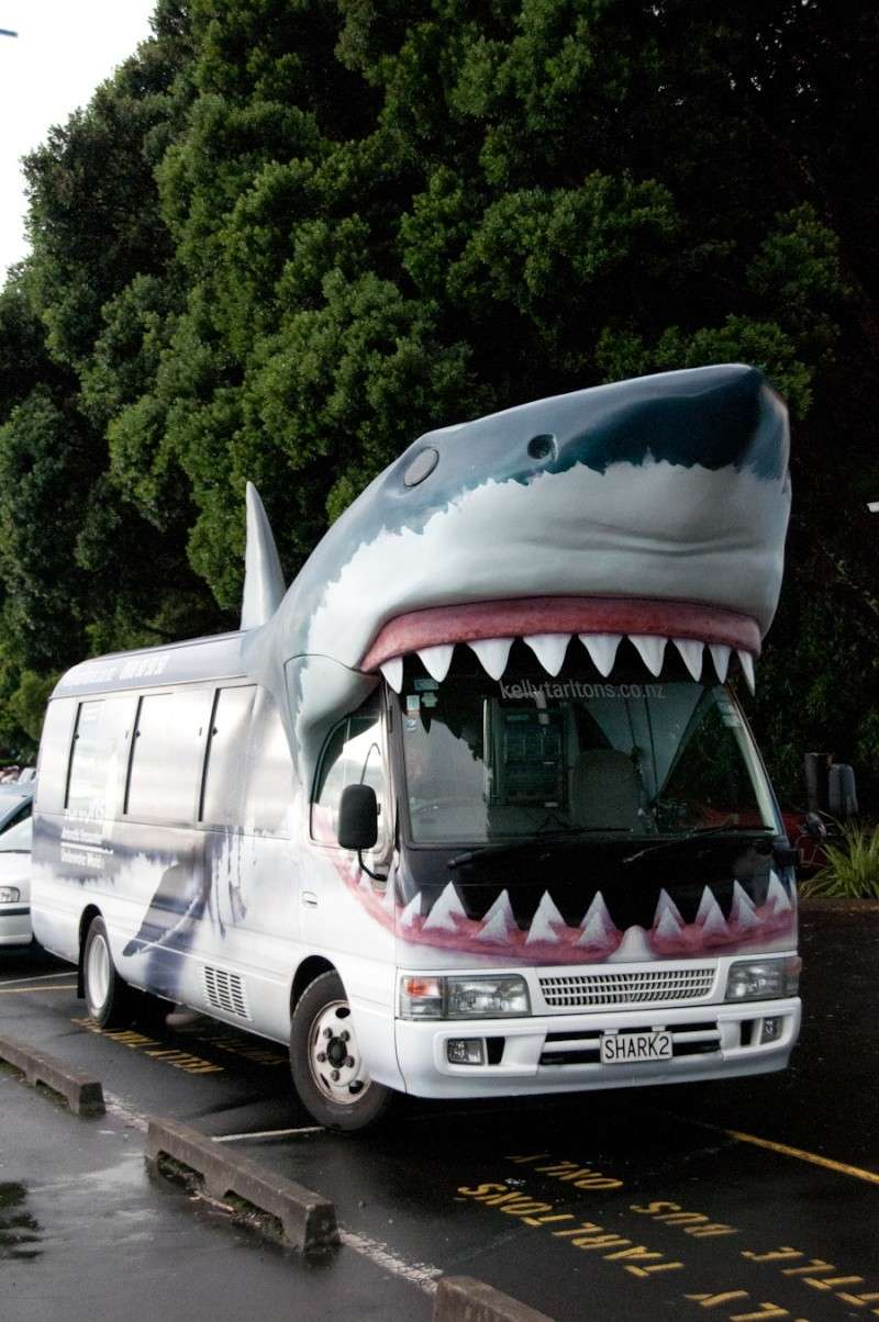 LE REQUIN Shark10