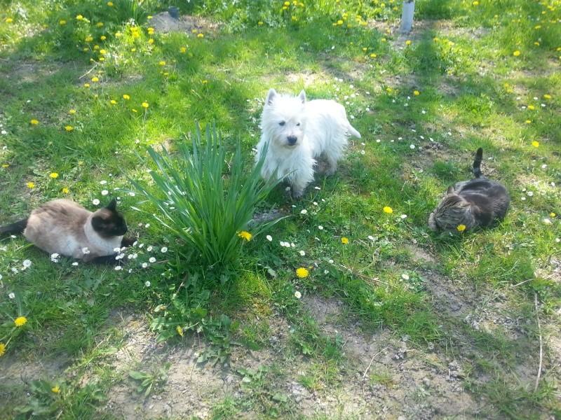 Poupy; Missy; Minouche et Pelote 20130410