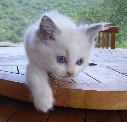 Spécials Photos : Avant/Après de nos chats - Page 6 Avatar10