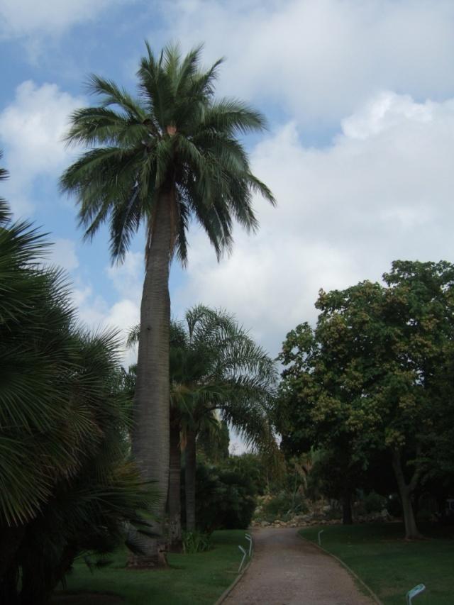 (83) Jardin Olbius Riquier - Hyères Dscf0820