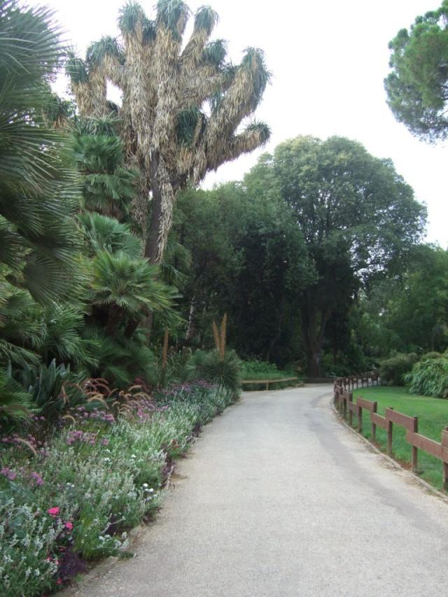 (83) Jardin Olbius Riquier - Hyères Dscf0821