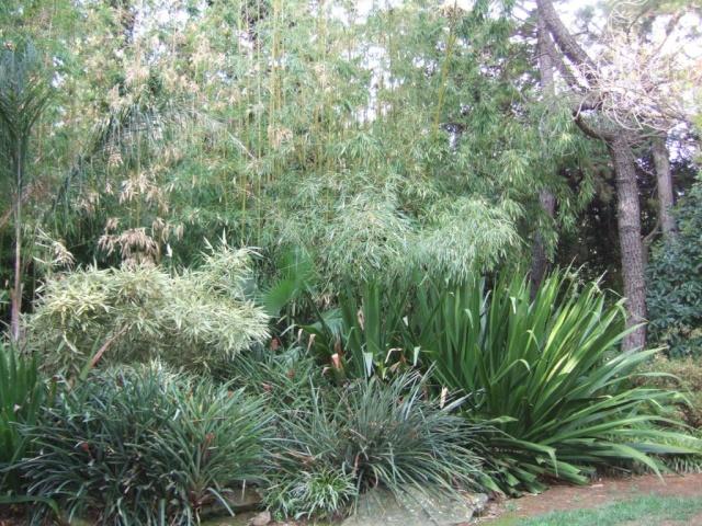 (83) Jardin Olbius Riquier - Hyères Dscf0822