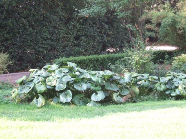 (83) Jardin Olbius Riquier - Hyères Dscf0824