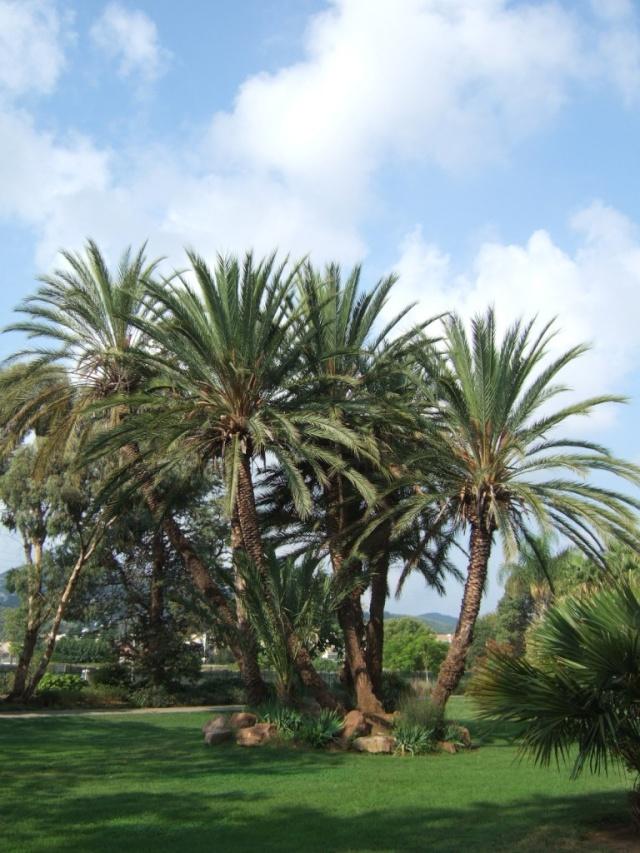 (83) Jardin Olbius Riquier - Hyères Dscf0825