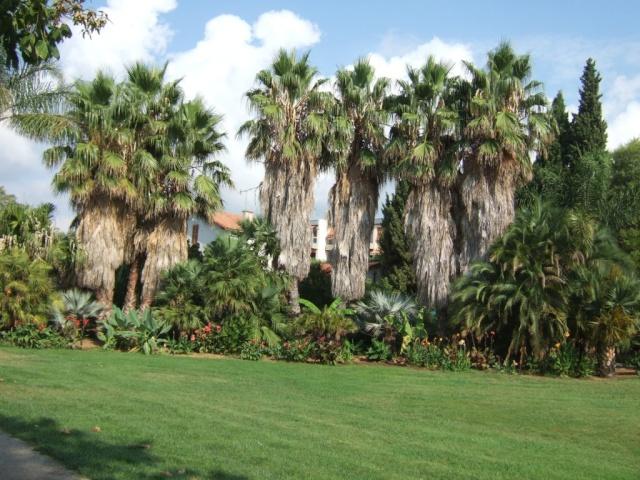 (83) Jardin Olbius Riquier - Hyères Dscf0826